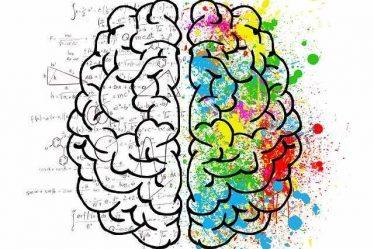 Beynimizi Tanıyalım