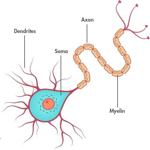 Nöron Nedir ?